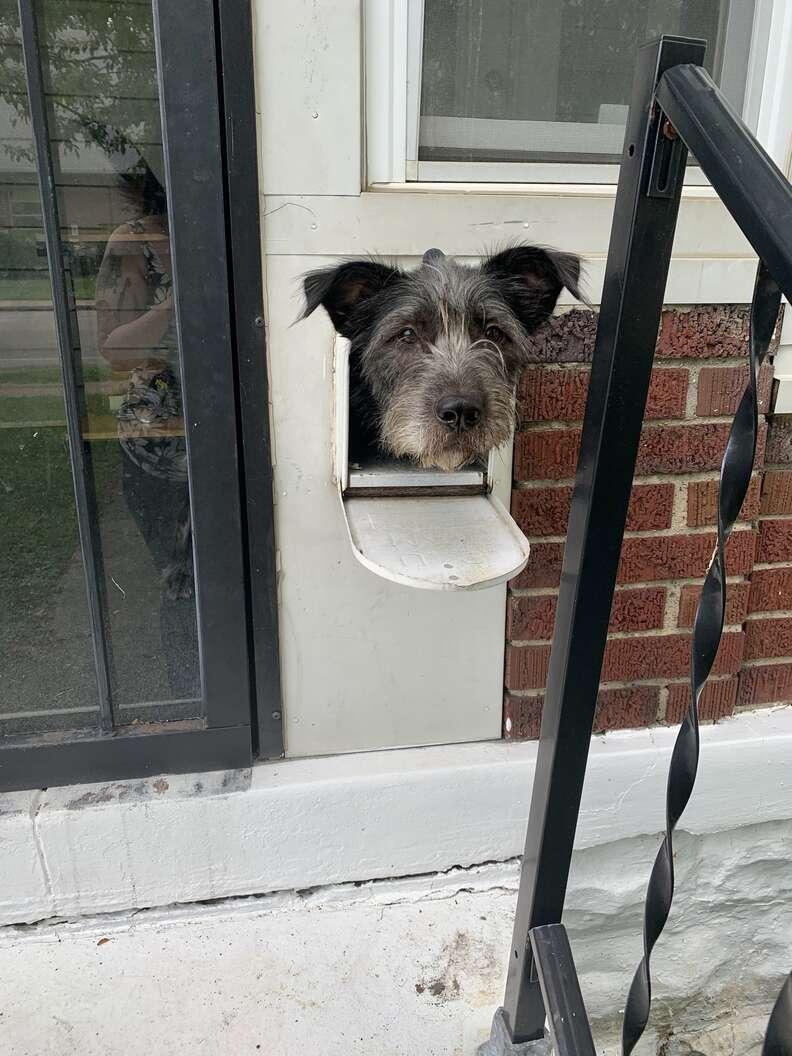 Dog in mailbox surprises mailman