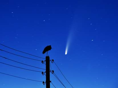 pictures of comet neowise