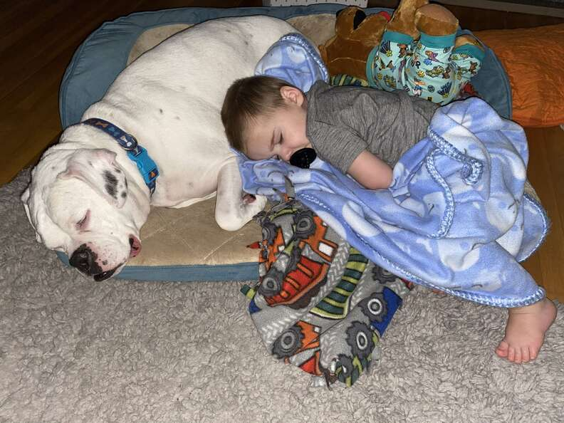 Little boy sleeps with his boxer in a dog bed