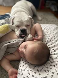 Boxer comforts toddler when he's sick