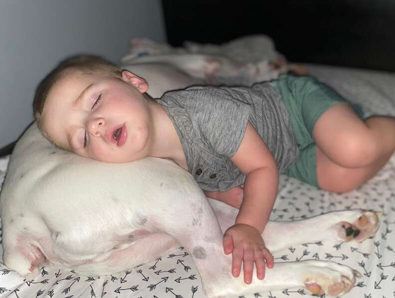 Boxer and toddler sleep together