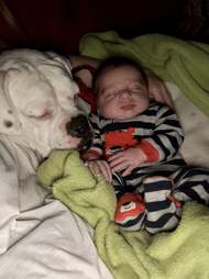 Dog cuddles baby
