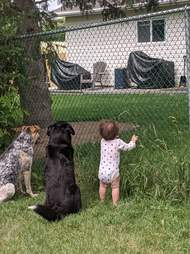 Little girl waits with dogs for treats