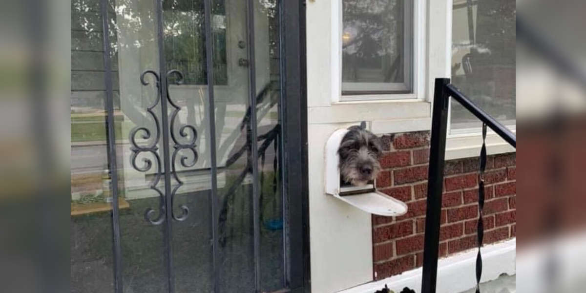 Dog Realizes Mailbox Is The Perfect Way To Greet The Neighborhood