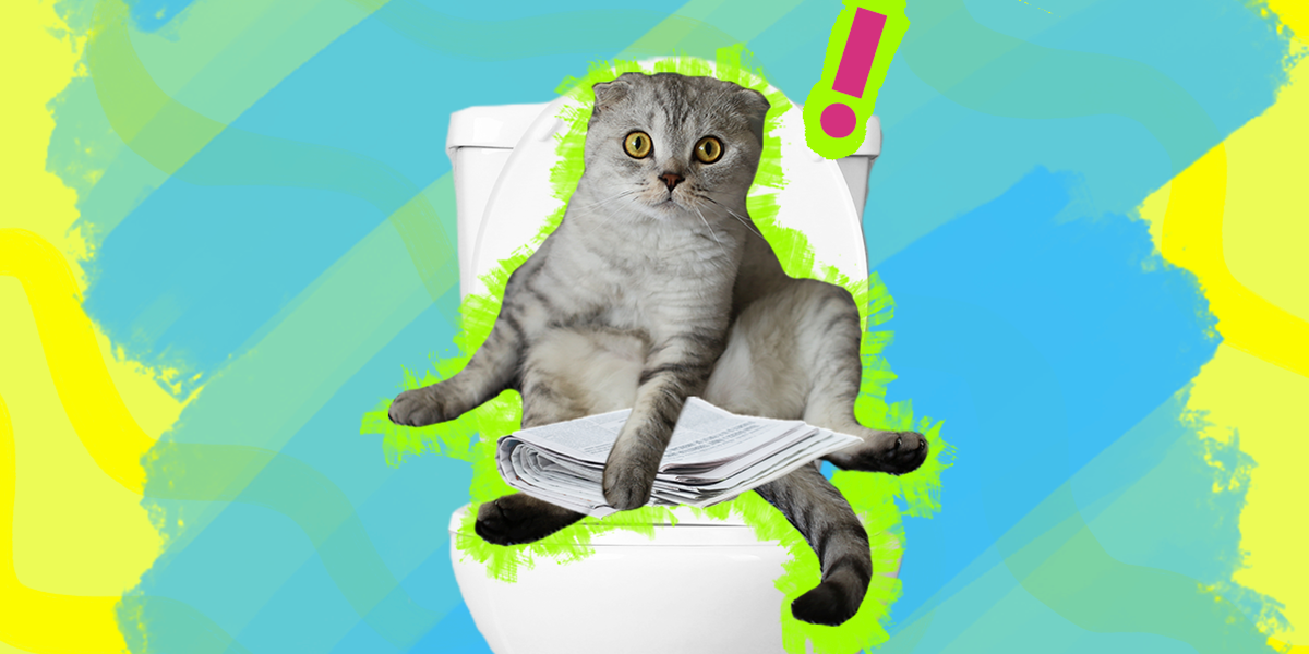 Can I Train My Cat To Use The Toilet?