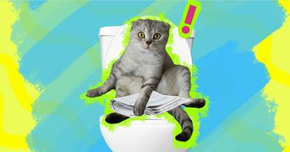 Cat sitting on toilet