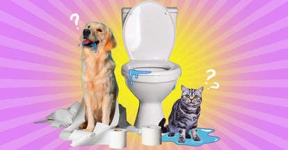 Dog and Cat drinking toilet bowl water