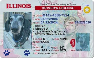 A driver's license for Moose the 16-year-old dog