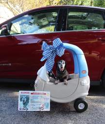 Dog gets his own car and driver's license