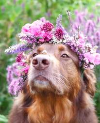 Dog wearing a flower crown with a snail on his nose