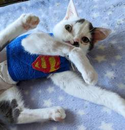 Kitten with crooked face gets superman wrap