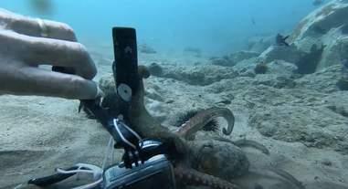 octopus steals camera