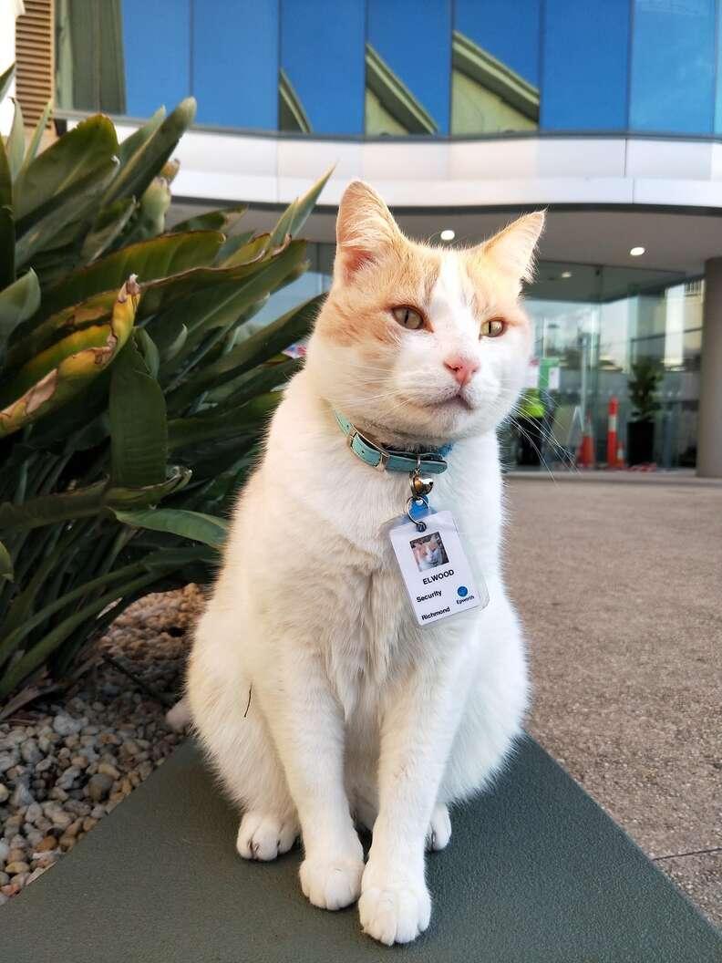 hospital cat