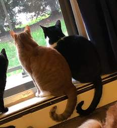 Cat brothers watch the storm together