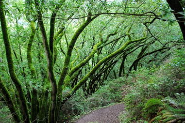 Huckleberry Botanical Regional Preserve