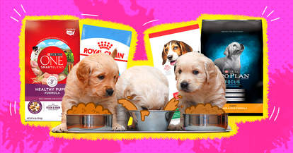 vet recommended puppy food