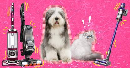 Best pet vacuums