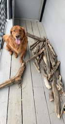 Dog shows off massive stick collection
