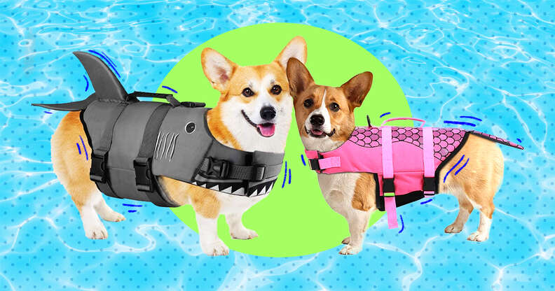 Dogs in lifejackets