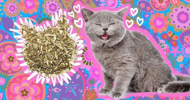 happy cat with catnip