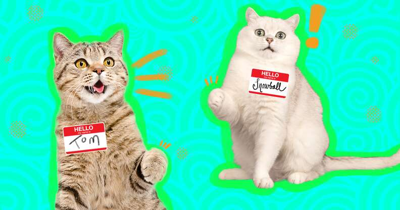 two cats with nametags