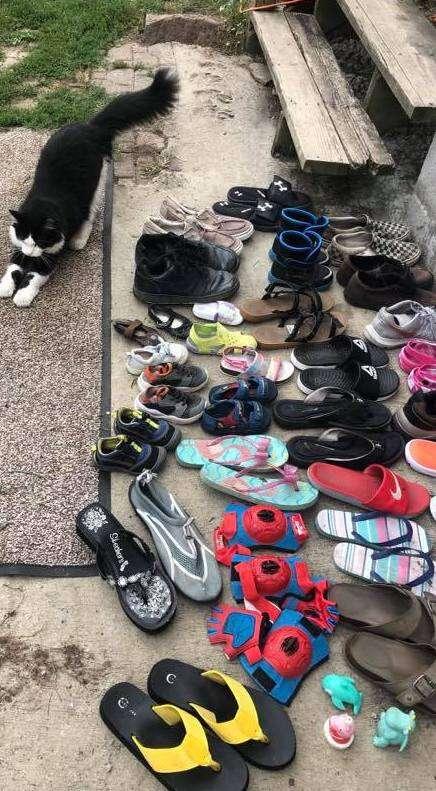 cat steals shoes