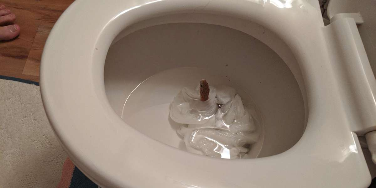 Woman Goes To Flush Toilet — And Is Shocked To See A Snake Looking Back At Her