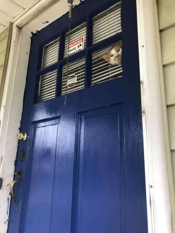 cat wants to go outside