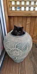 cat hiding spot
