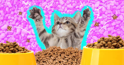 Happy Kitten with food