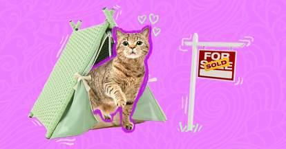 Cat in a tent
