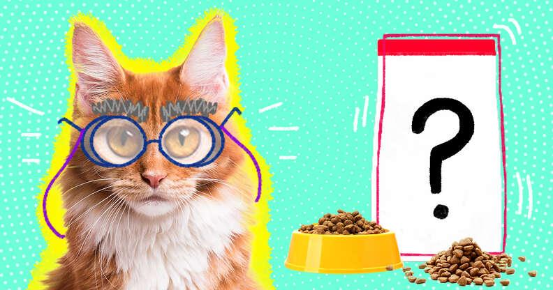 senior cat with food