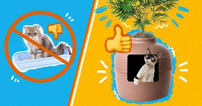 Covered Cat Litter Boxes
