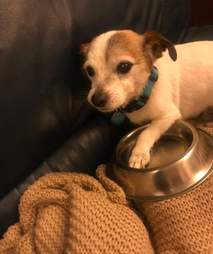 Dog snuggles his food bowl