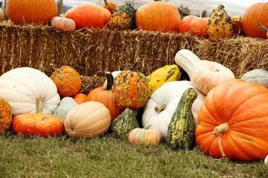 Barton Hill Farms pumpkin patch in fall