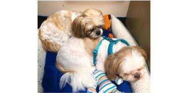 snuggling pups