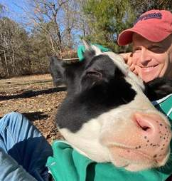 Rescue cow demands hugs from her dad