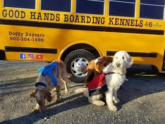 Dogs ride a yellow school bus