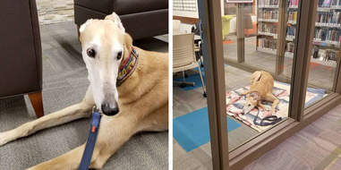 Dog volunteers at library