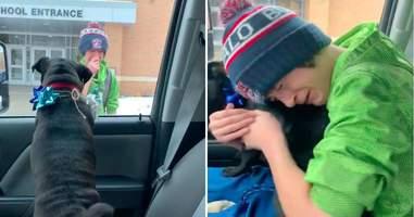 Boy reunites with lost dog after school