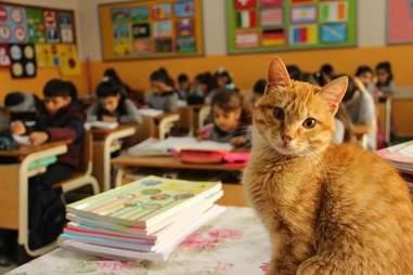 Cat wanders into third-grade class