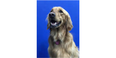 Dog with pearly white teeth