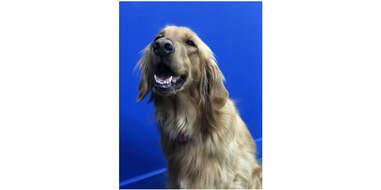 Dog smiling big