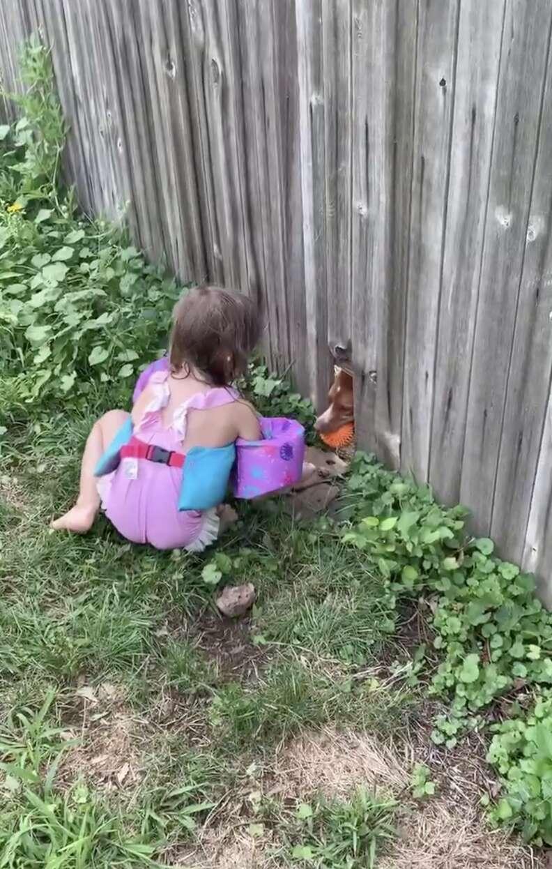 dog plays fetch through fence