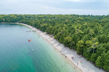 a narrow beach backed by an enormous grove of pine trees