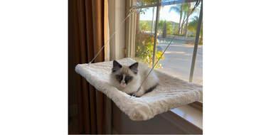 plush cat window perch