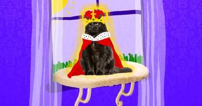 royal cat on window perch
