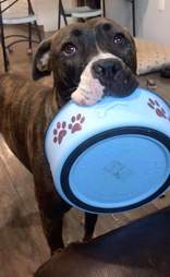 Mya picks up her bowl for food