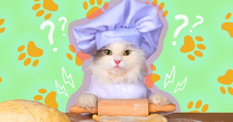 cat kneading with a rolling pin