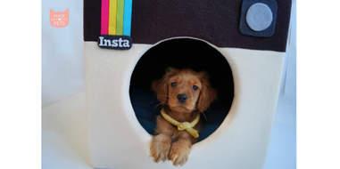 instagram dog house etsy